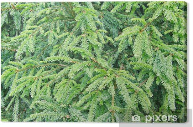 Obraz na płótnie Jodła drzewa w tle - Sporty na świeżym powietrzu