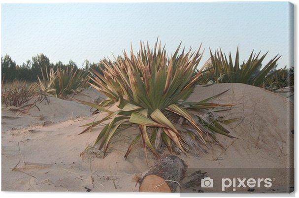 Obraz na płótnie Juki dzikie wydmy - Rośliny