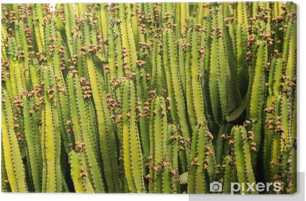 Obraz na płótnie Kaktus z teksturą deseń Lanzarote - Dom i ogród