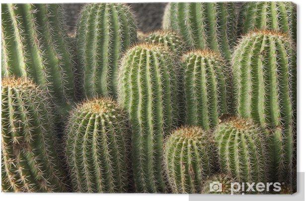 Obraz na płótnie Kaktusy - Rośliny