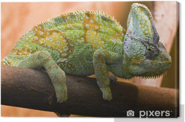 Obraz na płótnie Kameleon - Tematy