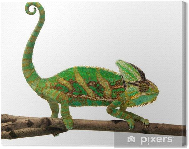 Obraz na płótnie Kameleon - Inne Inne