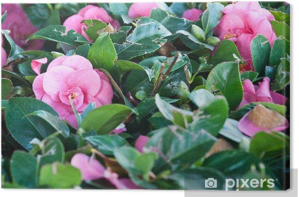 Obraz na płótnie Kamelia żywopłotu - Dom i ogród
