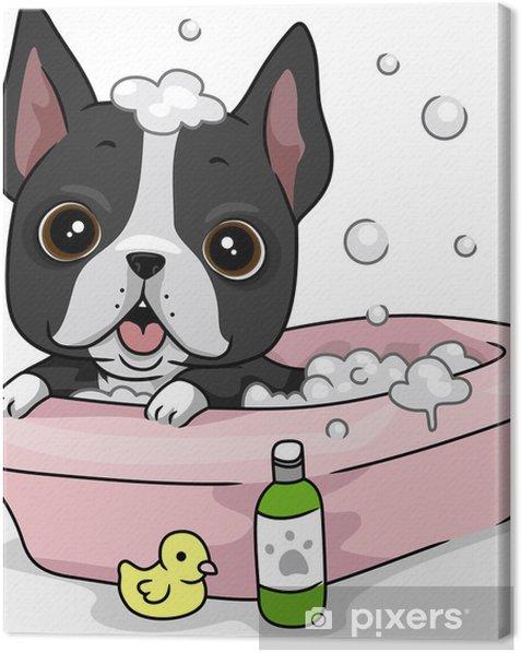 Obraz na płótnie Kąpiel psa - Ssaki