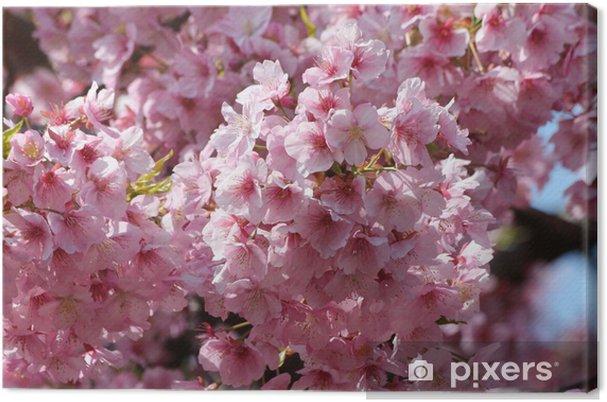 Obraz na płótnie Kawazu wiśniowe drzewo - Kwiaty