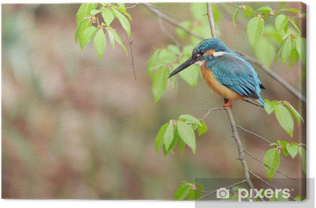 Obraz na płótnie Kingfisher okoń - Ptaki