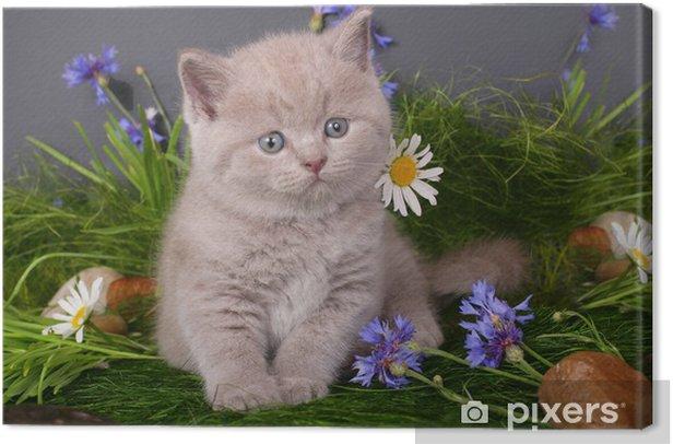 Obraz na płótnie Kitten w kwiaty na czarnym tle - Tematy