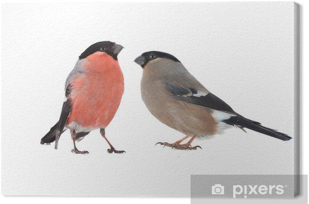 Obraz na płótnie Kobieta gil - Ptaki