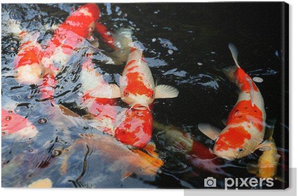 Obraz na płótnie Koi pond - Zwierzęta żyjące pod wodą