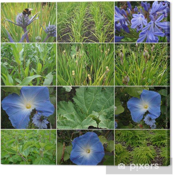 Obraz na płótnie Kolaż zdjęć różnych roślin - Rośliny