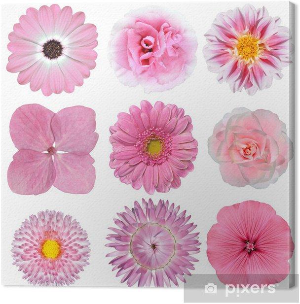 Obraz na płótnie Kolekcja różowy biały kwiatów izolowanych na białym - Kwiaty