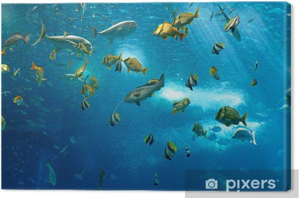 Obraz na płótnie Kolorowe ryby - Ryby