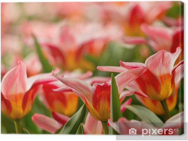 Obraz na płótnie Kolorowe tulipany - Pory roku