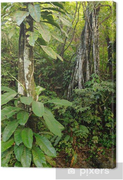 Obraz na płótnie Kolumbijskiej dżungli Darien dziki - Dżungla