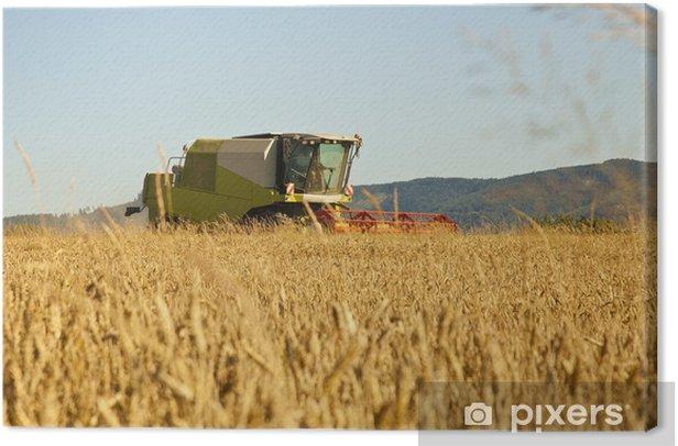 Obraz na płótnie Kombajny zbożowe w pracy zebranie pole pszenicy. - Rolnictwo
