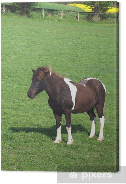 Obraz na płótnie Koń, majstrować Braunschecke, - Ssaki