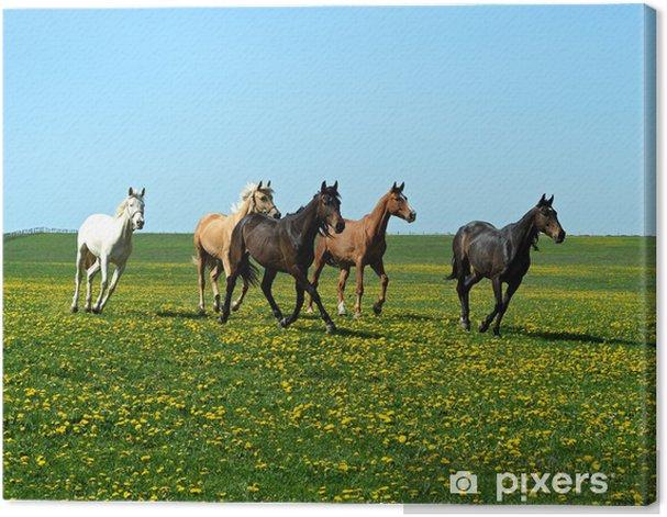 Obraz na płótnie Koń - Ssaki