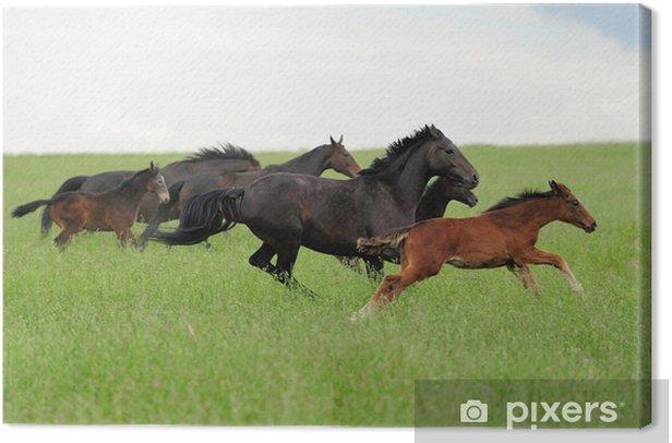 Obraz na płótnie Konie na łące - Ssaki