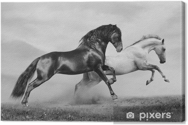 Obraz na płótnie Konie uruchomić -