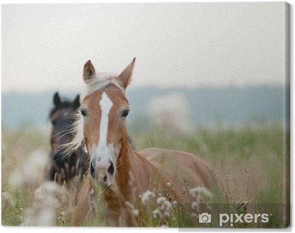 Obraz na płótnie Konie w polu - Tematy