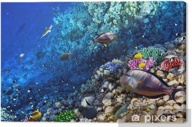 Obraz na płótnie Koral i ryb w czerwonym sea.egypt - Afryka