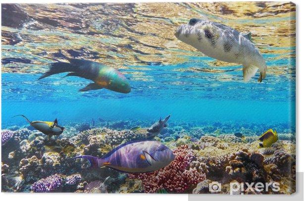 Obraz na płótnie Koral i ryb w morzu czerwonym. Egipt, Afryka. - Afryka