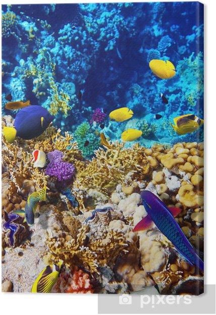 Obraz na płótnie Koral i ryb w morzu czerwonym. Egipt, Afryka. - Ryby