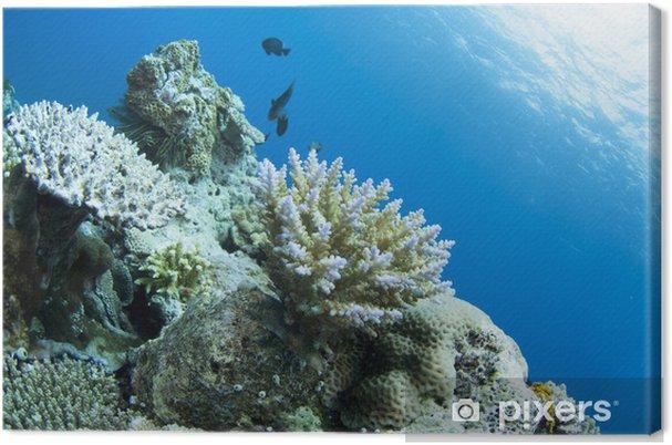 Obraz na płótnie Koral rośnie w dnie morskim - Pod wodą