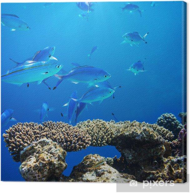 Obraz na płótnie Koralowych ryb - Zwierzęta żyjące pod wodą