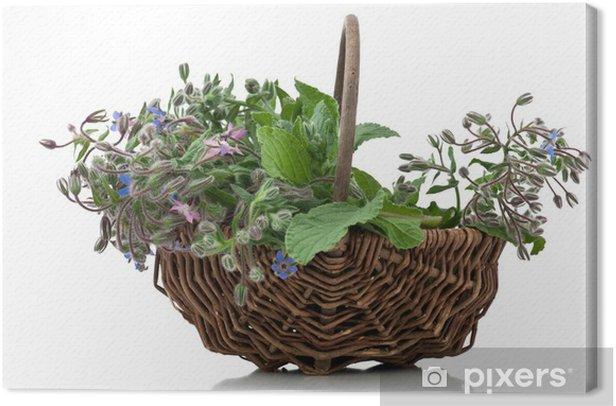 Obraz na płótnie Koszyk z ogórecznika - Przyprawy i zioła
