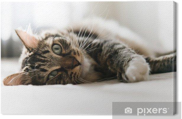 Obraz na płótnie Kot leżący na łóżku - Ssaki