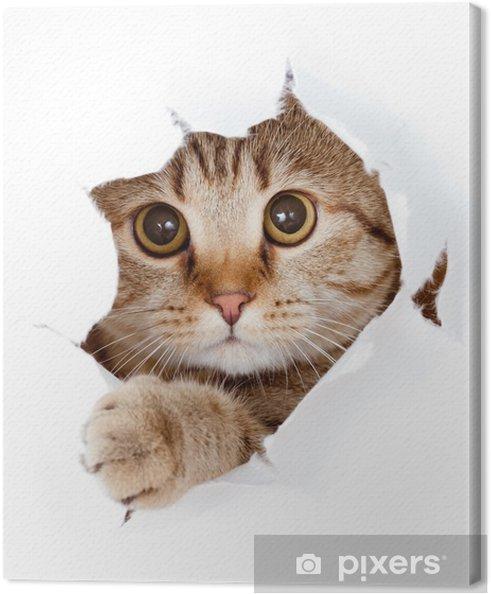 Obraz na płótnie Kot patrząc w stronę papieru podarte izolowane otworu - Tematy