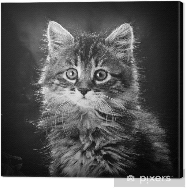 Obraz na płótnie Kot - Tematy