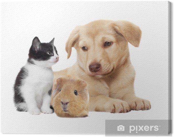 Obraz na płótnie Kotek i szczeniak i świnka - Ssaki