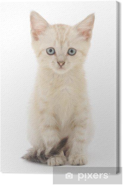 Obraz na płótnie Kotek na białym tle - Ssaki
