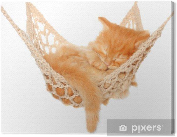 Obraz na płótnie Kotek śliczny rudowłosy spania w hamaku - Wakacje