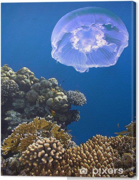 Obraz na płótnie Krajobraz pod wodą - Pod wodą