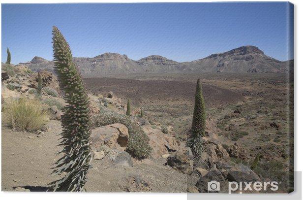 Obraz na płótnie Krajobraz w parku narodowym Teide - Góry