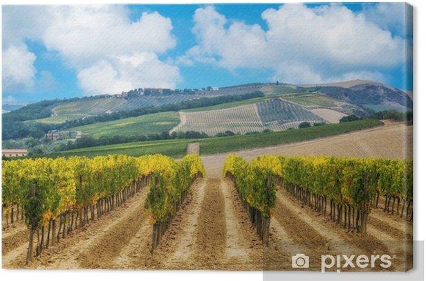 Obraz na płótnie Krajobraz winnicy w Toskanii we włoszech. - Podróże