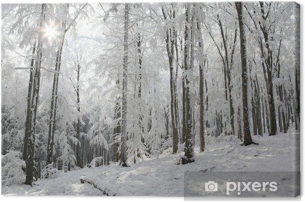 Obraz na płótnie Krajobraz z zimowym lesie w słoneczny mroźny poranek - Drzewa