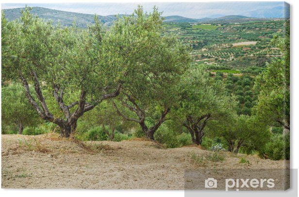 Obraz na płótnie Kreta, Grecja - Krajobraz wiejski