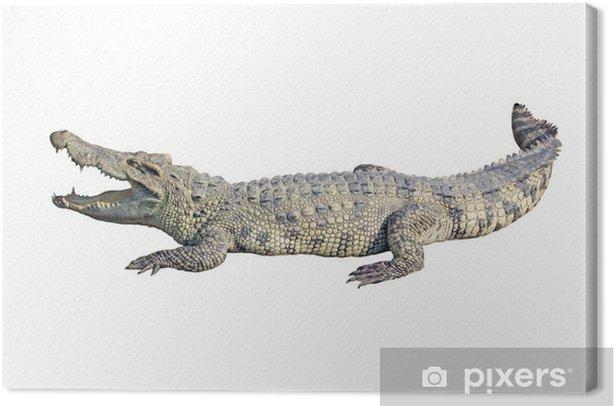 Obraz na płótnie Krokodyl na białym tle - Inne Inne