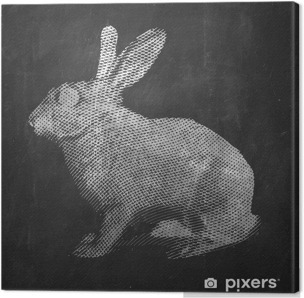 Obraz na płótnie Królik. Zwierzę hodowlane. Vintage ilustracja grawerowane na czystym tle. - Zwierzęta