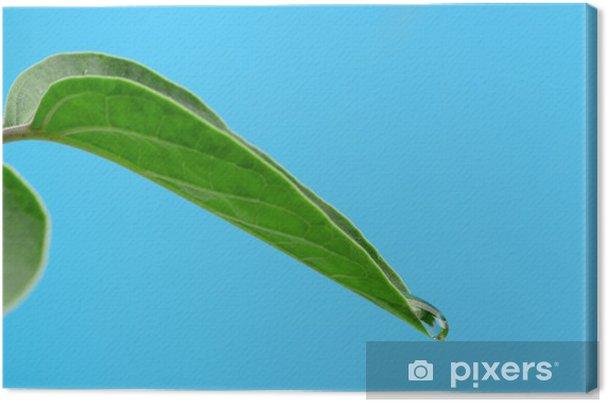 Obraz na płótnie Kropla rosy na liściu - Pory roku