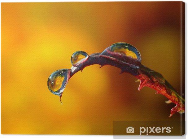 Obraz na płótnie Krople rosy z bliska - Abstrakcja