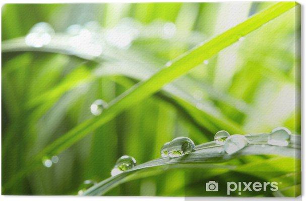 Obraz na płótnie Krople wody na zielonej trawie - Pory roku