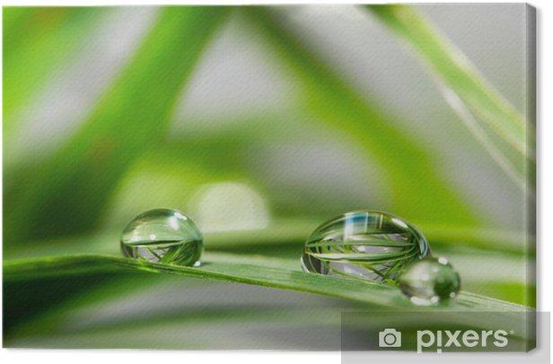 Obraz na płótnie Krople z zielona trawa - Rośliny