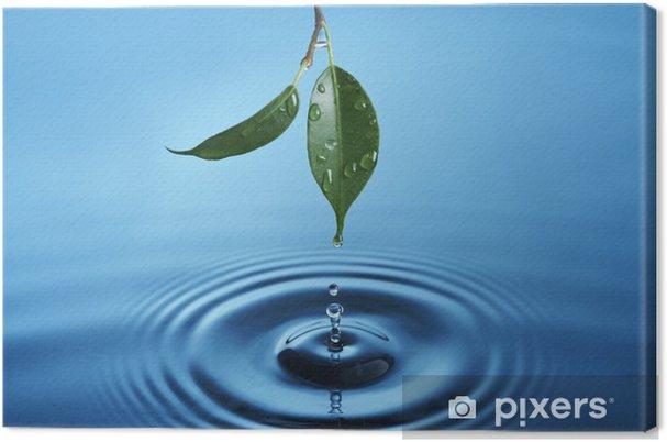 Obraz na płótnie Kropli wody spadających z zielonych liści tworzy kręgi - Abstrakcja