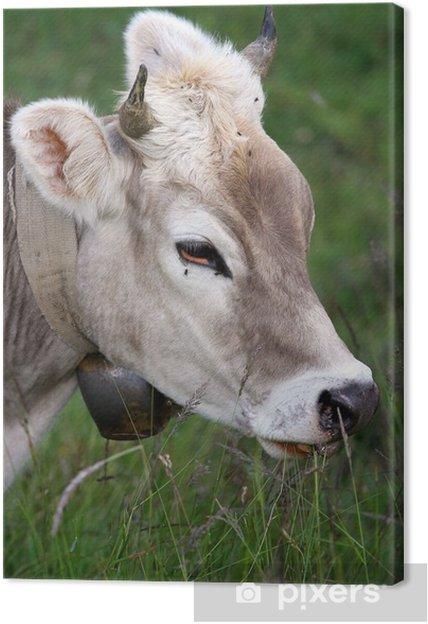 Obraz na płótnie Krowa - Ssaki