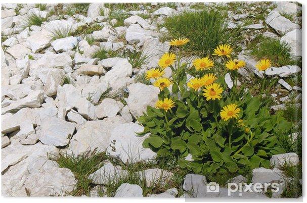 Obraz na płótnie Kupalnik - Kwiaty